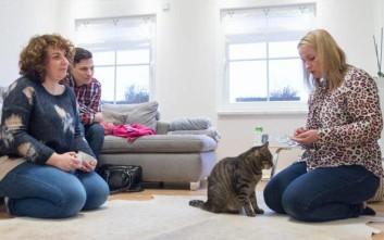 Οι γάτες πάνε στον ψυχολόγο