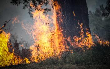 Μεγάλη φωτιά στο Λασίθι