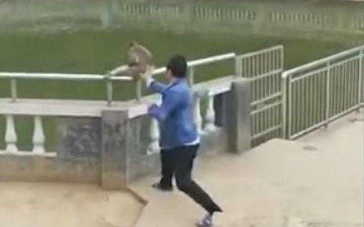 Έσπρωξε τη μαιμού μέσα στη λίμνη και εκείνη τον πήρε στο κυνήγι