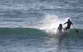 Δελφίνι βγαίνει από το νερό και ρίχνει σέρφερ στην θάλασσα
