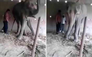 Οι τελευταίες βασανιστικές ώρες ενός ελέφαντα σε αιχμαλωσία