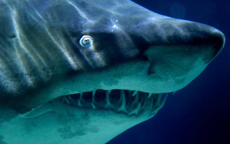 Εγκλωβισμένοι καρχαρίες σε αδέσποτο δίχτυ ανακαλύφθηκαν στα νησιά Κέιμαν