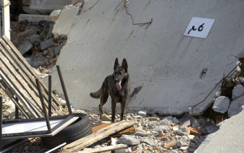 Μπορούν πράγματι τα ζώα να προβλέπουν τους σεισμούς;