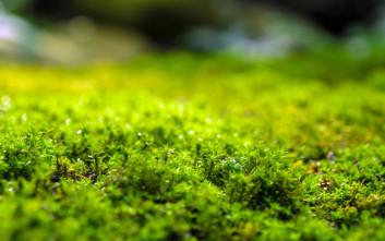Βρύα που αφαιρούν το αρσενικό από το μολυσμένο νερό ανακάλυψαν οι επιστήμονες