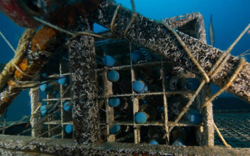 Η πανάκριβη σαμπάνια που παλιώνει κάτω από τη θάλασσα
