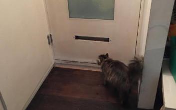 Έχασε τα κλειδιά, έπρεπε όμως να ταΐσει τη γάτα