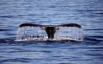Φέρι συγκρούστηκε με φάλαινα στην Ιαπωνία, 87 τραυματίες