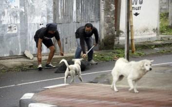 Διεθνής εκστρατεία για την απαγόρευση εμπορίας κρέατος σκύλου