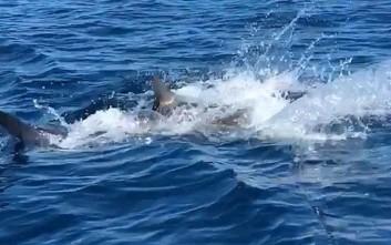 Έπιασαν καρχαρία με το καλάμι κι αυτό που ακολούθησε τους τρέλανε
