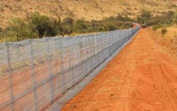 Ο μεγαλύτερος φράχτης στον κόσμο φτιάχτηκε για να προστατεύει από… τις αγριόγατες