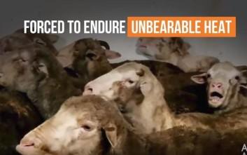 Σοκάρουν τα βίντεο με τις εξαγωγές ζώων