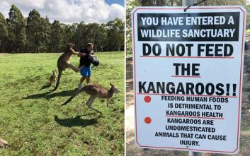 Νέα επίθεση καγκουρό σε τουρίστες που το τάιζαν