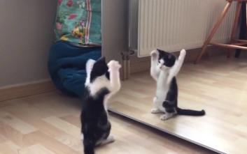 Η ζωή με γάτες είναι κάπως έτσι