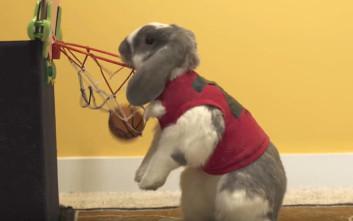 Ένα κουνέλι με ταλέντο στο μπάσκετ
