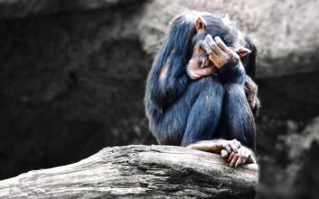 Να τι δεν είχαν ποτέ κοινό άνθρωπος και χιμπαντζής