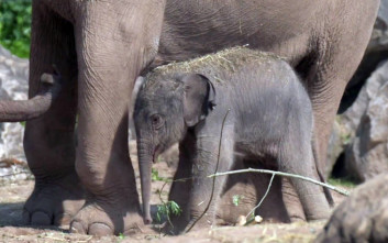 Γεννητούρια – έκπληξη σε βρετανικό ζωολογικό κήπο