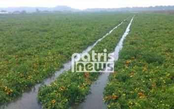 Η κακοκαιρία «έπνιξε» τις καλλιέργειες στην Ηλεία