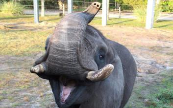 Ο λιχούδης ελέφαντας του Μάικλ Τζάκσον… το έσκασε