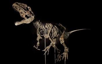 Δεν φαντάζεστε πόσα έδωσε συλλέκτης για σπάνιο απολίθωμα δεινοσαύρου