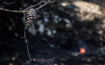 Πυρκαγιά σε αγροτοδασική έκταση στην Καστοριά