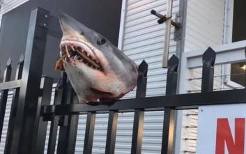Παλούκωσαν κεφάλι καρχαρία σε φράχτη και του έβαλαν στο στόμα… πίτσα