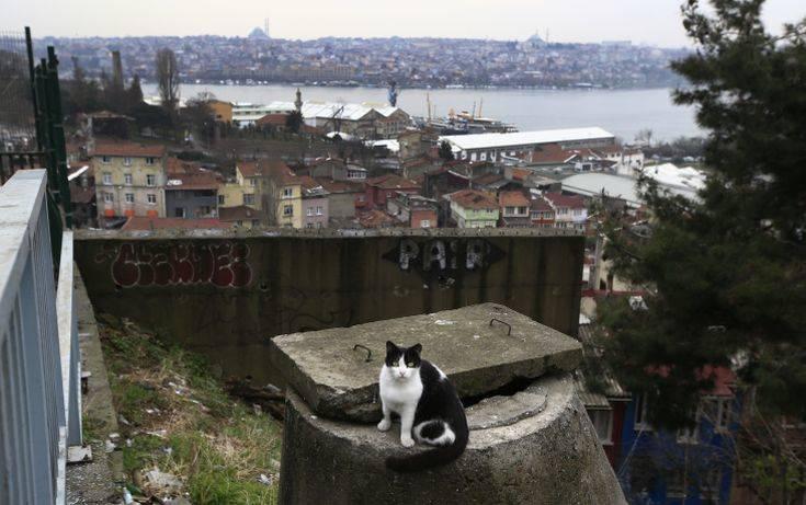 Σάλος στην Τουρκία μετά το νέο περιστατικό βασανισμού ζώου