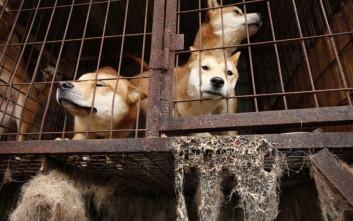 Παράνομη η σφαγή σκύλων για το κρέας τους στη Νότια Κορέα με απόφαση δικαστηρίου