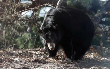Έσκασε μπουνιά σε… αρκούδα για να σώσει τον σκύλο του