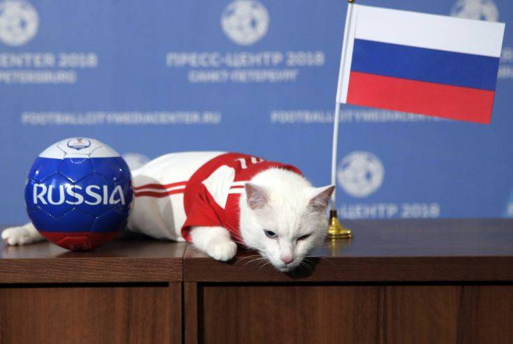 Achilles the cat, one of the State Hermitage Museum mice hunters, lies on a table after attempting to predict the result of the opening match of the 2018 FIFA World Cup between Russia and Saudi Arabia in St.Petersburg, Russia, Wednesday, June 13, 2018. Achilles chose Russia. (AP Photo/Dmitri Lovetsky)