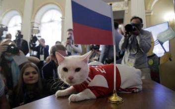 Ο γάτος Αχιλλέας προβλέπει πάλι νίκη της Ρωσίας