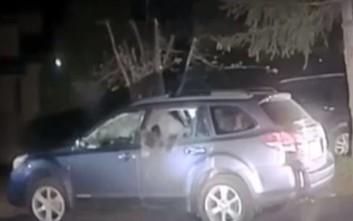 Αρκούδα εγκλωβίστηκε σε αυτοκίνητο