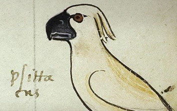 Τι αποκαλύπτει ένας παπαγάλος σε χειρόγραφο του 13ου αιώνα