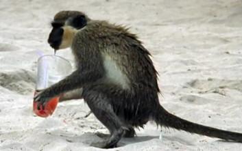 Να πώς είναι τα πιθηκάκια όταν… σουρώνουν