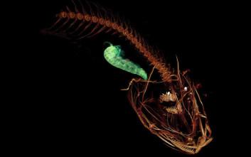 Τα πιο περίεργα ζώα που ανακαλύφθηκαν το 2018