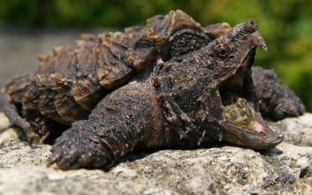 Εκπαιδευτικός τάισε χελώνα με… κουτάβι μπροστά στους μαθητές του