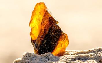 Βρέθηκαν βάτραχοι παγιδευμένοι σε κεχριμπάρι 99 εκατ. ετών