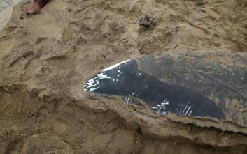 To απόκοσμο κουφάρι που βρέθηκε σε παραλία και προβλημάτισε τους βιολόγους