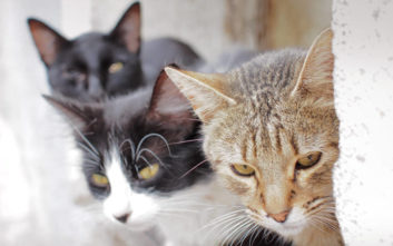 Νέα μελέτη για τις αλλεργίες στα παιδιά, τα σκυλιά και τις γάτες