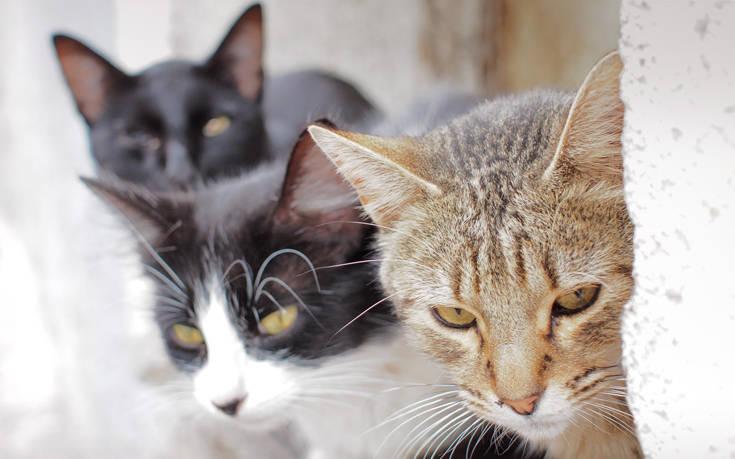 Πρόγραμμα απογραφής… για τις γάτες εγκαινιάζεται στην Ουάσινγκτον