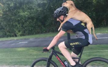 Ποδηλάτης έσωσε τραυματισμένο σκύλο, μεταφέροντάς τον στην πλάτη του