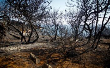 Η ανατριχιαστική περιγραφή της Χριστίνας Λαμπίρη για τη φωτιά στο Μάτι
