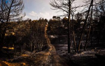 Άρχισαν οι εργασίες για την απομάκρυνση καμένων δέντρων από τη Ραφήνα