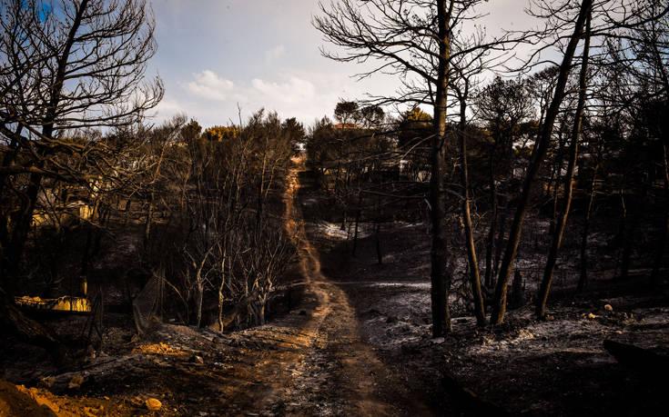 Πάρκο στο πυρόπληκτο Μάτι θα δημιουργήσει η Ιερά Σύνοδος
