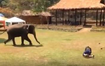 Ελέφαντας βλέπει τον φροντιστή να «κινδυνεύει» και σπεύδει να τον σώσει