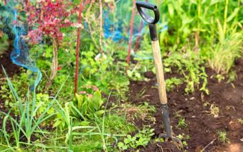 Πώς να χρησιμοποιήσετε τον καφέ στον κήπο σας