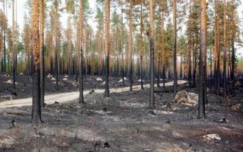 Βελτιώνεται η κατάσταση με τις πυρκαγιές στη Σουηδία, αποχωρούν οι Γάλλοι διασώστες