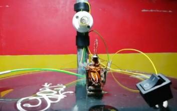 Εκτέλεσε κατσαρίδα… στην ηλεκτρική καρέκλα