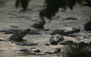 Έσφαξαν σχεδόν 300 κροκόδειλους σε χωριό της Ινδονησίας
