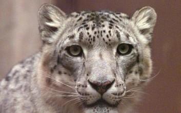 Σκυλίτσα «υιοθέτησε» νεογέννητη λεοπάρδαλη στο Βλαδιβοστόκ