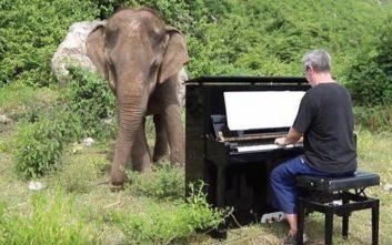 Τυφλός ελέφαντας «χορεύει» με την μουσική από το πιάνο